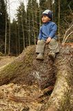 Child on stump Stock Images