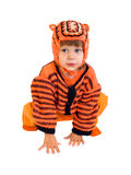 The child in a suit of a tiger. On a white background royalty free stock photography