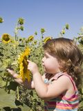 Child and sunflower Royalty Free Stock Photography