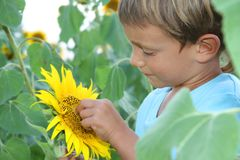 Child with sunflower outdoor Stock Photos