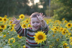 The child in sunflowers. In day stock images