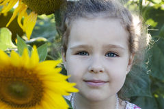 Child in sunflowers. Little girl on the field with sunflowers stock photos