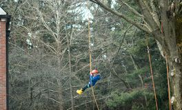 Child swinging high from a tree in Indiana USA. March 17, 2019 New Carlisle Indiana USA sugar camp days event; a little girl swings high above the tree tops, as stock photos