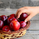 Child takes one plum from a basket. Fresh ripe plums in a wicker basket on an vintage wooden table. Healthy food for kids Stock Photography