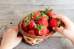 Child takes single strawberry from the basket. Little child holds a delicious strawberry in hand. Kids healthy snack Royalty Free Stock Photos