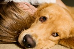 Child taking a nap with her dog Stock Image
