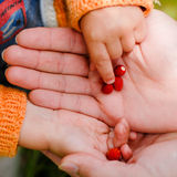 Child taking strawberry from father's hand Stock Photos