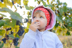 Child Tasting Grape Royalty Free Stock Photo