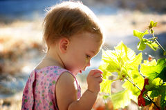 Child touching green leaves. Child touching green maple leaves in sunlight stock photo
