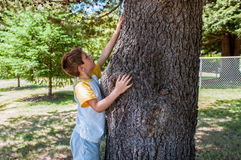 Child touching a tree Royalty Free Stock Images