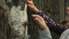 Child touching a tree trunk in a museum stock video footage