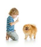Child training Spitz dog. on white background. stock photography