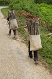 Child transports firewood, Laos Royalty Free Stock Photos