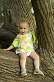 Child on a tree. Tree; woods; child; human; green; leaf; summer Stock Image