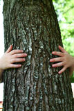 A child and a tree. A child hugging a large tree Royalty Free Stock Photography