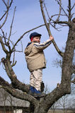 Child in a Tree. A child in a tree in spring stock photo