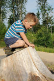 Child on tree stool Royalty Free Stock Photos