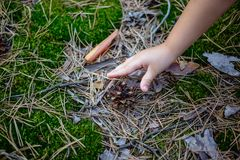 A child tries to take a pine cone from the ground. A child tries to take a pine cone from the ground Royalty Free Stock Photo