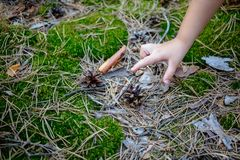 A child tries to take a pine cone from the ground. A child tries to take a pine cone from the ground Stock Image