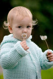 Child and two dandelions. Pretty child holding two dandelions in small arms stock photography