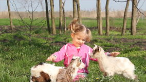Child and two goats. Child and two little goats stock footage