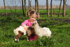 Child with two little goats Royalty Free Stock Photos