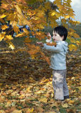 Child under autumn tree Royalty Free Stock Photos