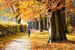 Child under tree in autumn park Stock Photos