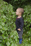 Child under a tree. Child standing under a beech tree in a park or forest, profile view Stock Photos