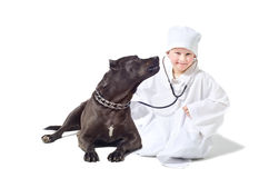 Child vet listens to dog Stock Image