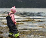 Child wading. Little girl in rain clothes wading in shallow water, looking into the water Stock Photos