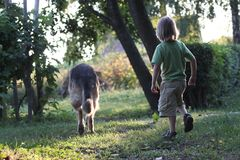A child on a walk  with a  dog. A child on a walk in the park with a large breed dog Royalty Free Stock Photo