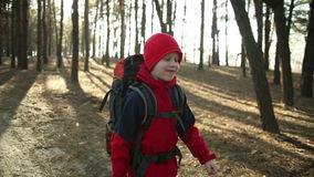 Child Walking in Adventure on Mountain Trails, Paths , hiking with backpack, Hikers Hiking in Forest, Enjoying Nature at Camping stock video