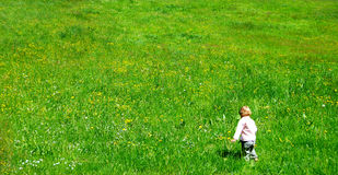 A child walking in the field Stock Image