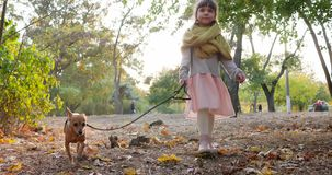 Child walking with dog on leash in sunny day on background of green trees at autumn park. Child walking with small dog on leash in sunny day on background of stock footage