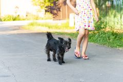 The child walks along the road next to a small black dog. royalty free stock images