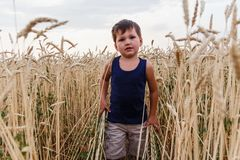 A child walks through a field of wheat royalty free stock photography