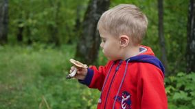 A child walks in Park in autumn. A child holds a white mushroom. A child walks in Park in autumn stock footage