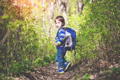 A child walks through the woods. Royalty Free Stock Image