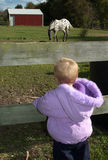 Child wants a pony. Little girl looks through a fence at a horse in a grassy field. a child and a possible expensive pet Stock Image