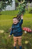 The child wants to pick an unripe green Apple Stock Photography
