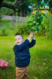 The child wants to pick an unripe green Apple Stock Photos