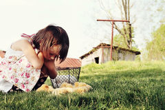 Child Watching Chicks Stock Images