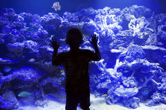 Child watching fish in a large Aquarium. The silhouette of a young boy looking at colorful tropical reef fish in a large Aquarium Stock Image