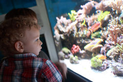 Child watching fishes Royalty Free Stock Photos
