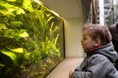 Child watching fishes Stock Image