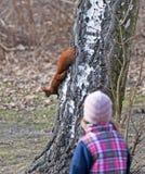 Child Watching squirrel Stock Photos