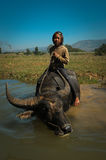 Child on water Buffalo 02 Stock Photography