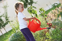 Child with watering can at gardening. Gardening. Little caucasian child with can watering flowers Royalty Free Stock Image