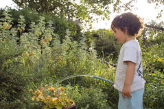 Child watering garden Royalty Free Stock Photo